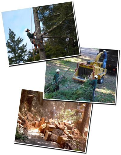 Tree work composite